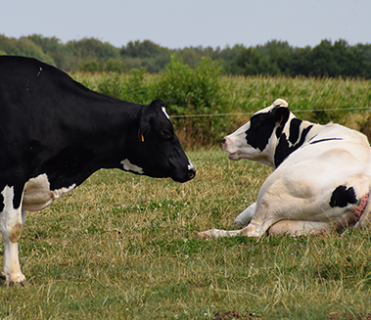 Brunch Info Vétérinaires et Eleveurs