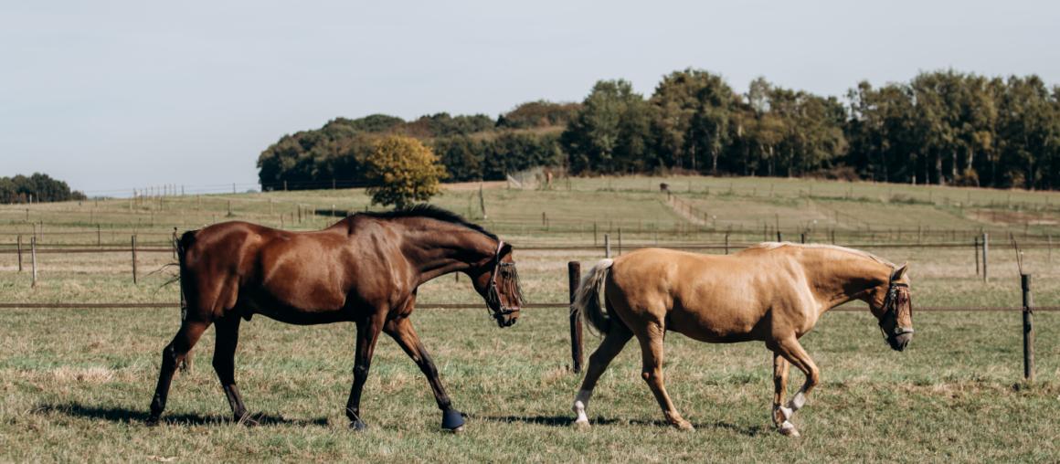 EQUIPASSION : Plus qu'un simple seau à lécher pour votre cheval